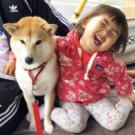 柴犬もぐとすーちゃん(インスタ)がかわいい!飼い主や画像、子分とは?【行列】